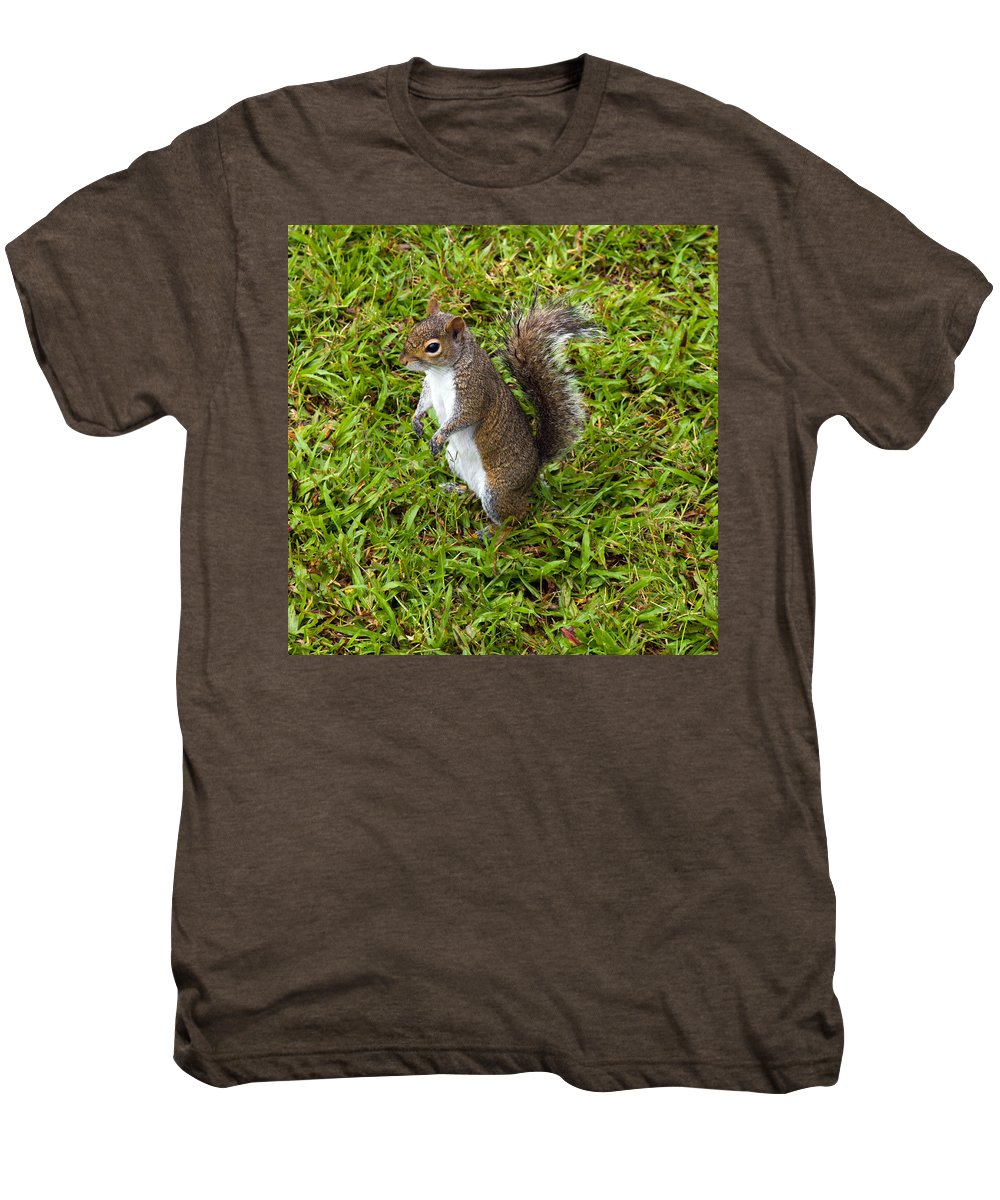 Squirrel; Eastern; Gray; Sciurus; Carolinensis; Swarm; Food; Florida; Eau; Gallie; Melbourne; Park; Men's Premium T-Shirt featuring the photograph Eastern Gray Squirrel by Allan Hughes