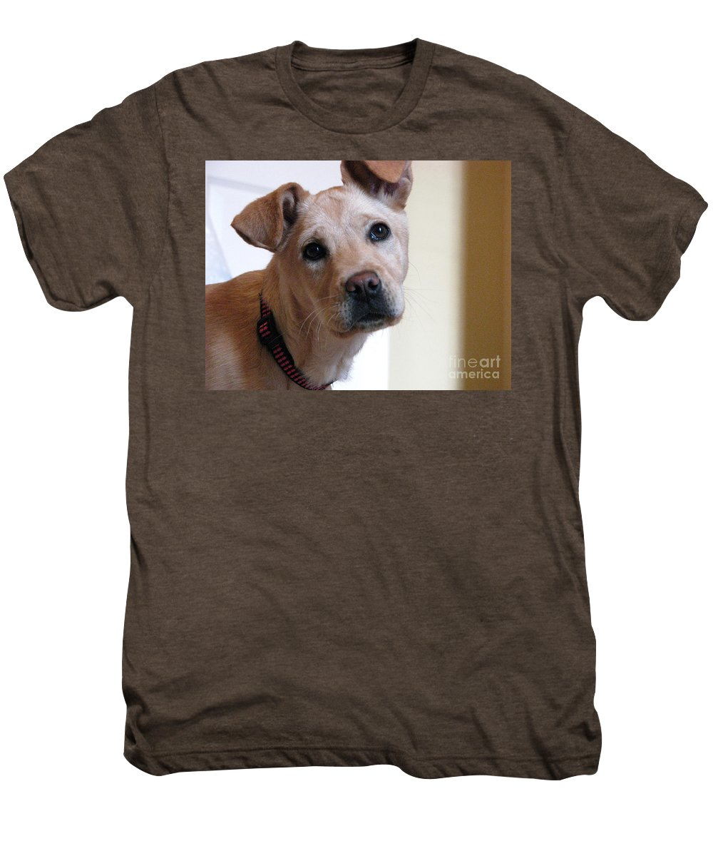Dog Men's Premium T-Shirt featuring the photograph Honey by Amanda Barcon