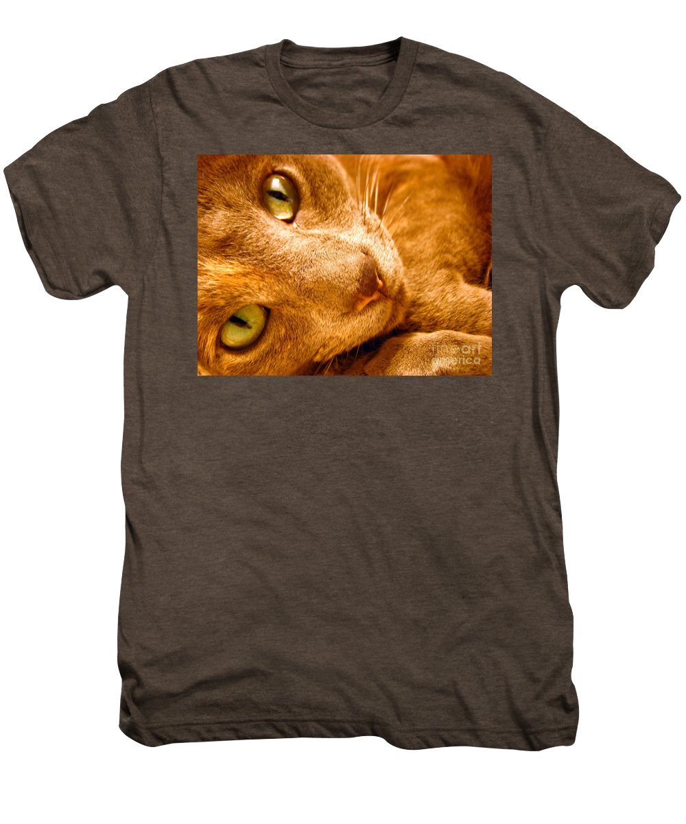 Cats Men's Premium T-Shirt featuring the photograph Kitty by Amanda Barcon