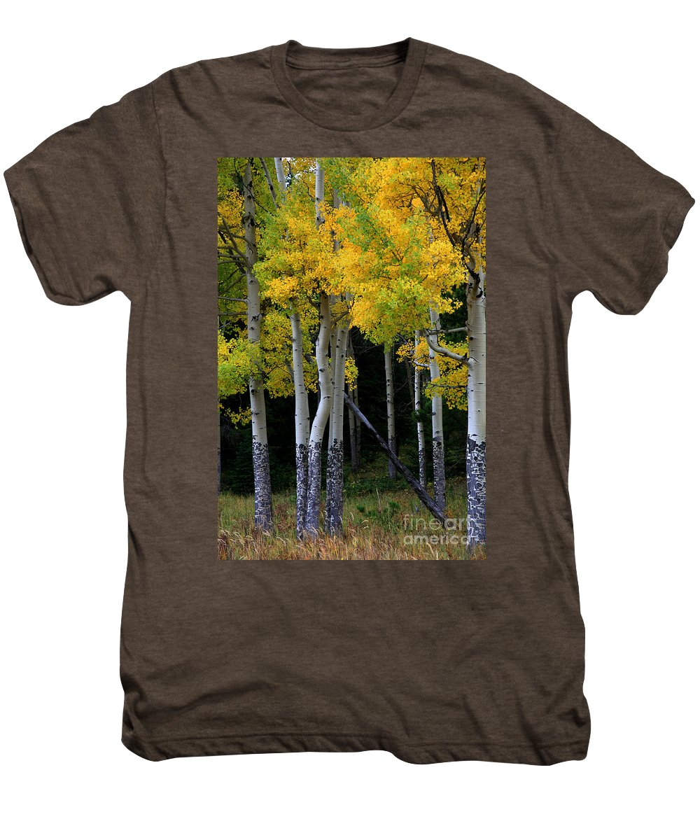 Aspens Men's Premium T-Shirt featuring the photograph Leaning Aspen by Timothy Johnson