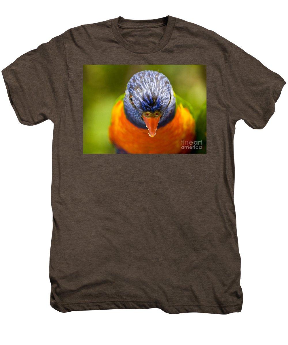 Rainbow Lorikeet Men's Premium T-Shirt featuring the photograph Rainbow Lorikeet by Avalon Fine Art Photography