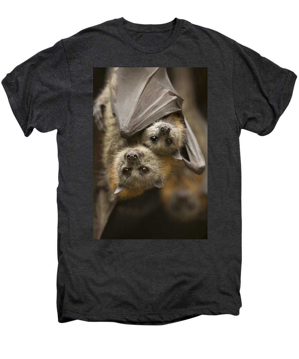 Bats Men's Premium T-Shirt featuring the photograph Hang In There by Mike Dawson
