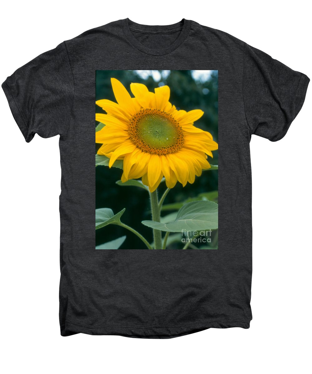 Flower Men's Premium T-Shirt featuring the photograph Sunflower In Seattle by Heather Kirk