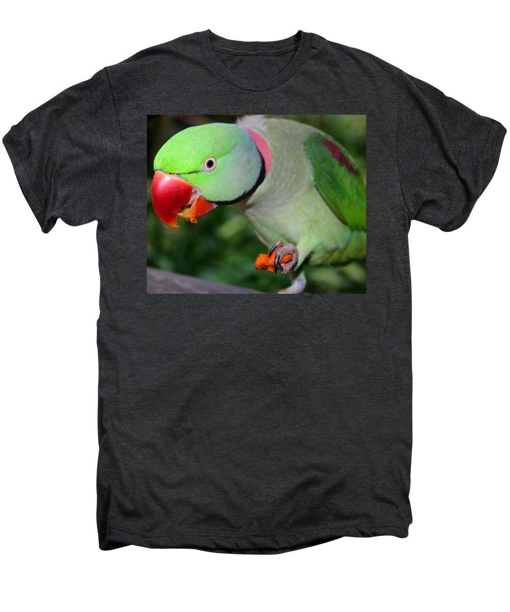Alexandrine Parrot Men's Premium T-Shirt featuring the photograph Alexandrine Parrot Feeding by Ralph A Ledergerber-Photography
