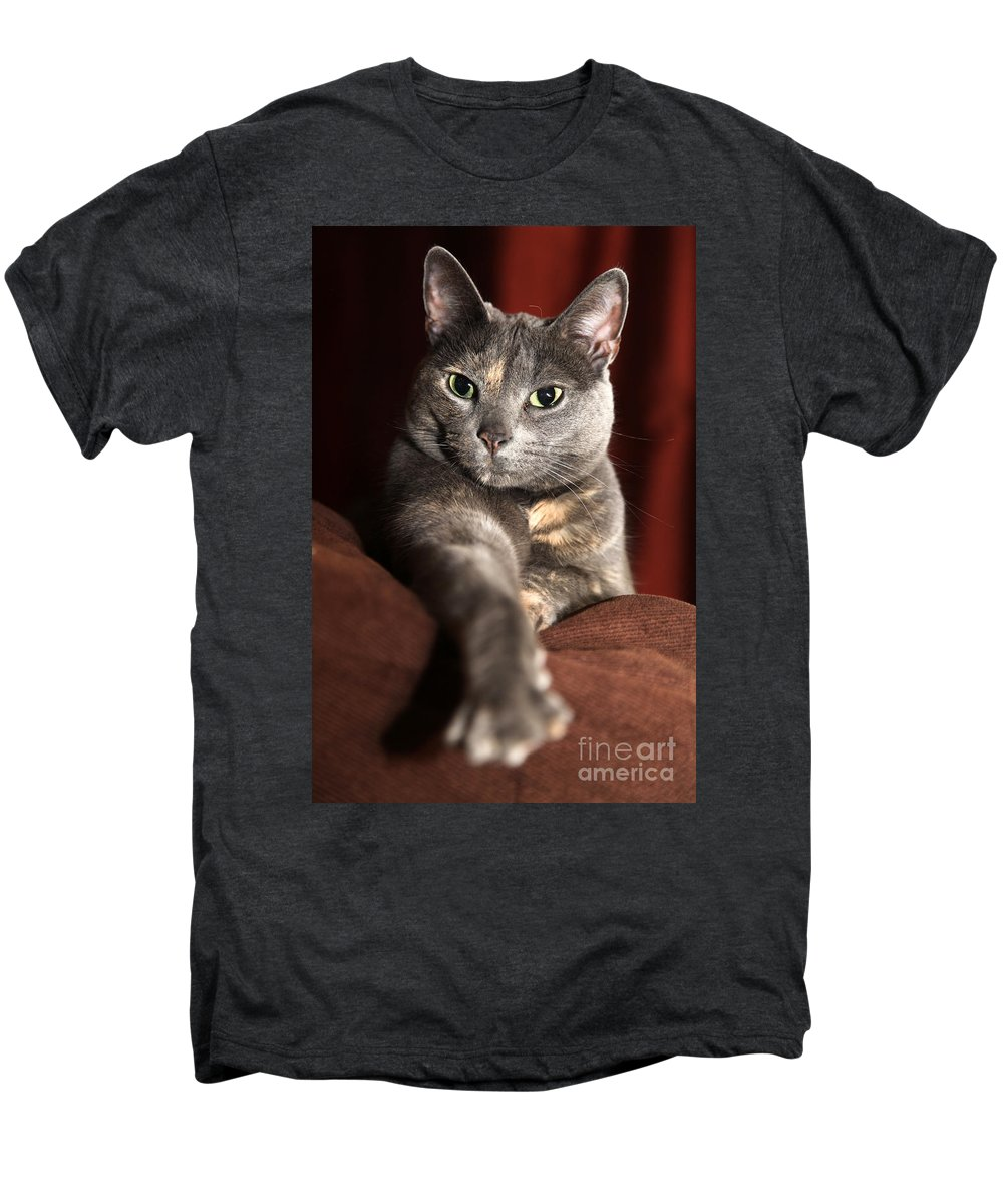 Kitty Men's Premium T-Shirt featuring the photograph Come Here by Amanda Barcon