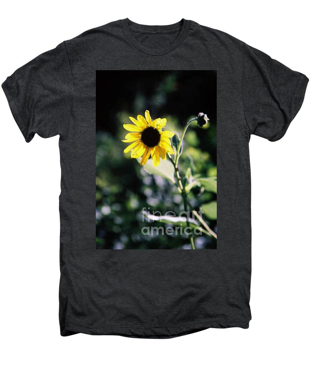 Sunflower Men's Premium T-Shirt featuring the photograph Summer Sunshine by Kathy McClure