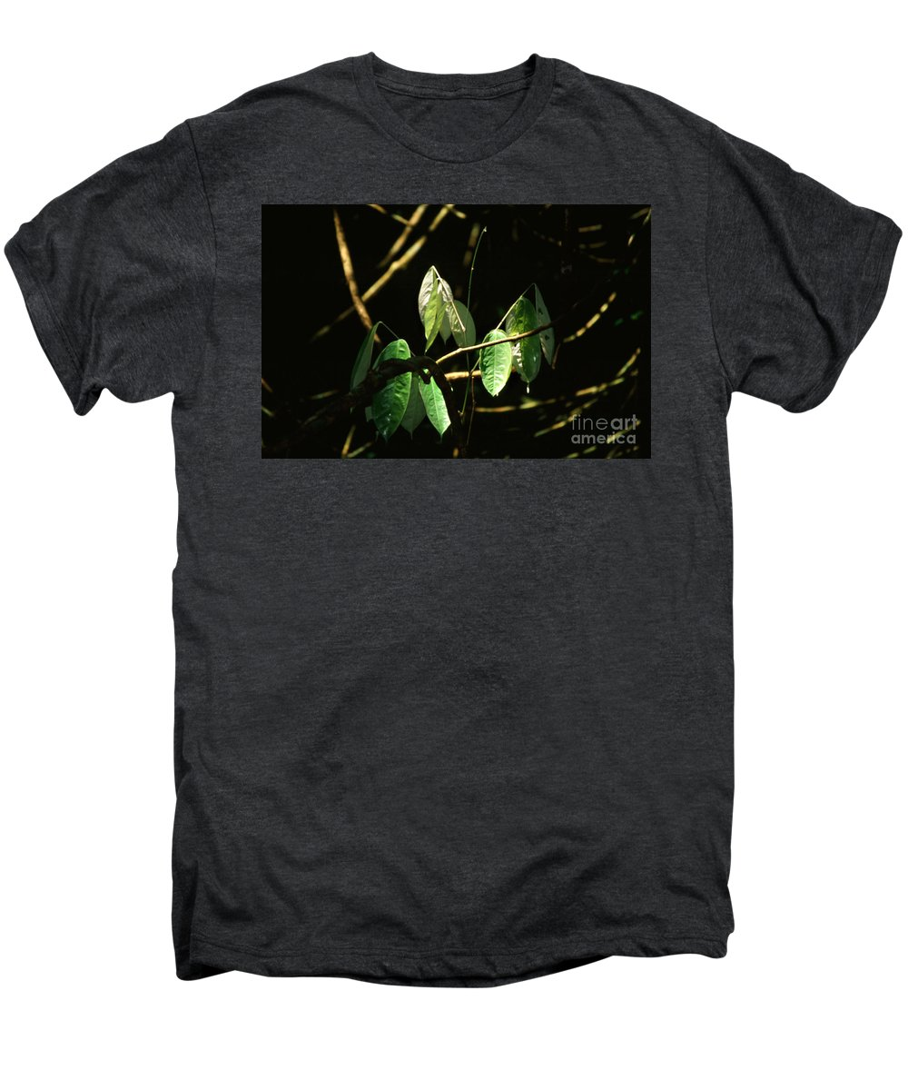 Leaves Men's Premium T-Shirt featuring the photograph Sunlit Leaves by Kathy McClure