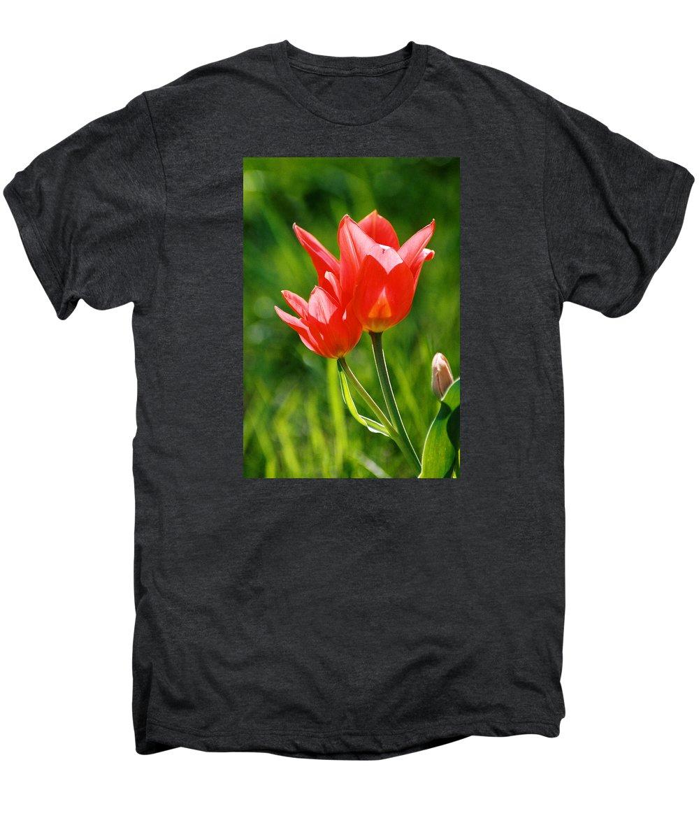 Flowers Men's Premium T-Shirt featuring the photograph Toronto Tulip by Steve Karol