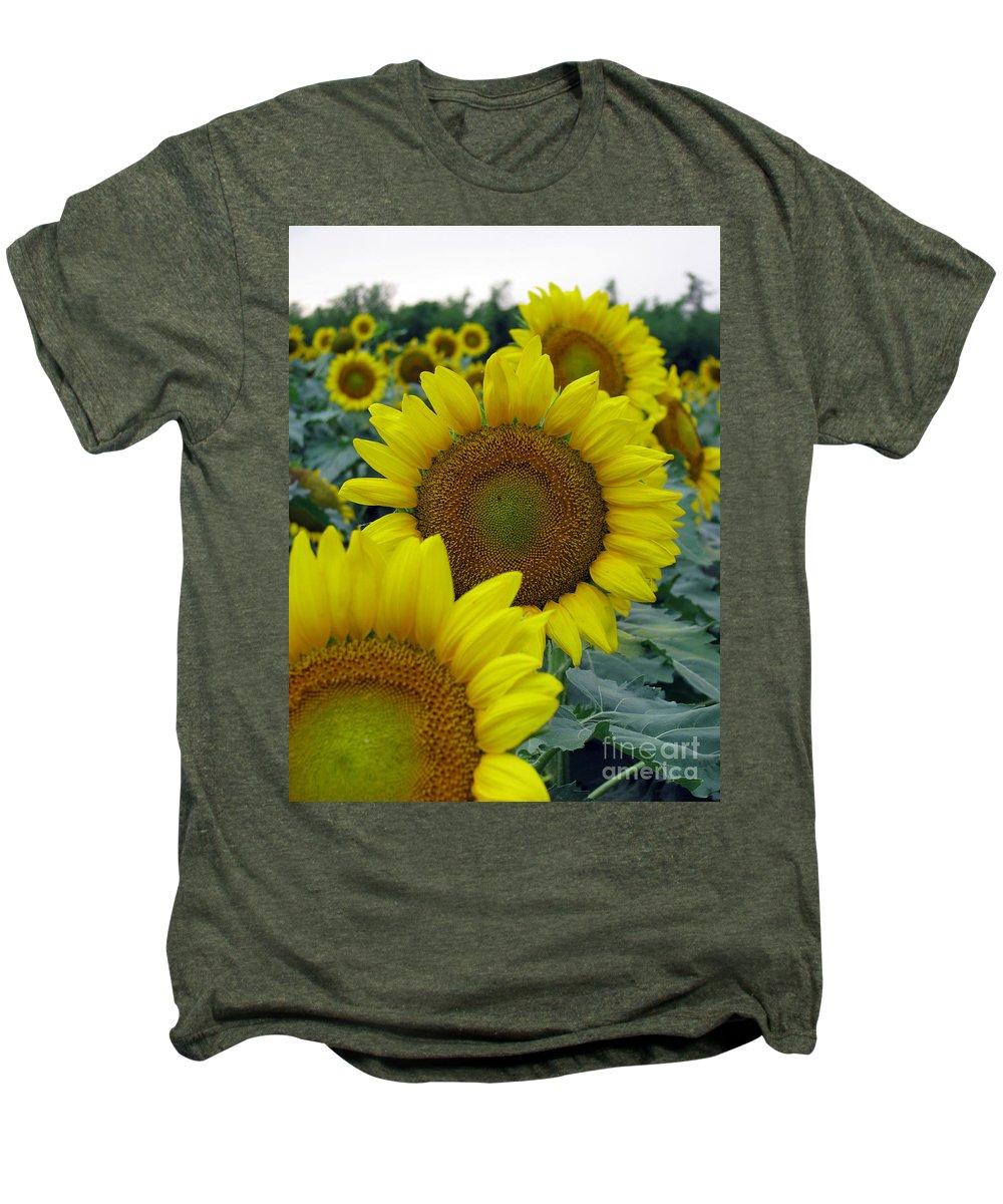 Sunflowers Men's Premium T-Shirt featuring the photograph Sunflower Series by Amanda Barcon