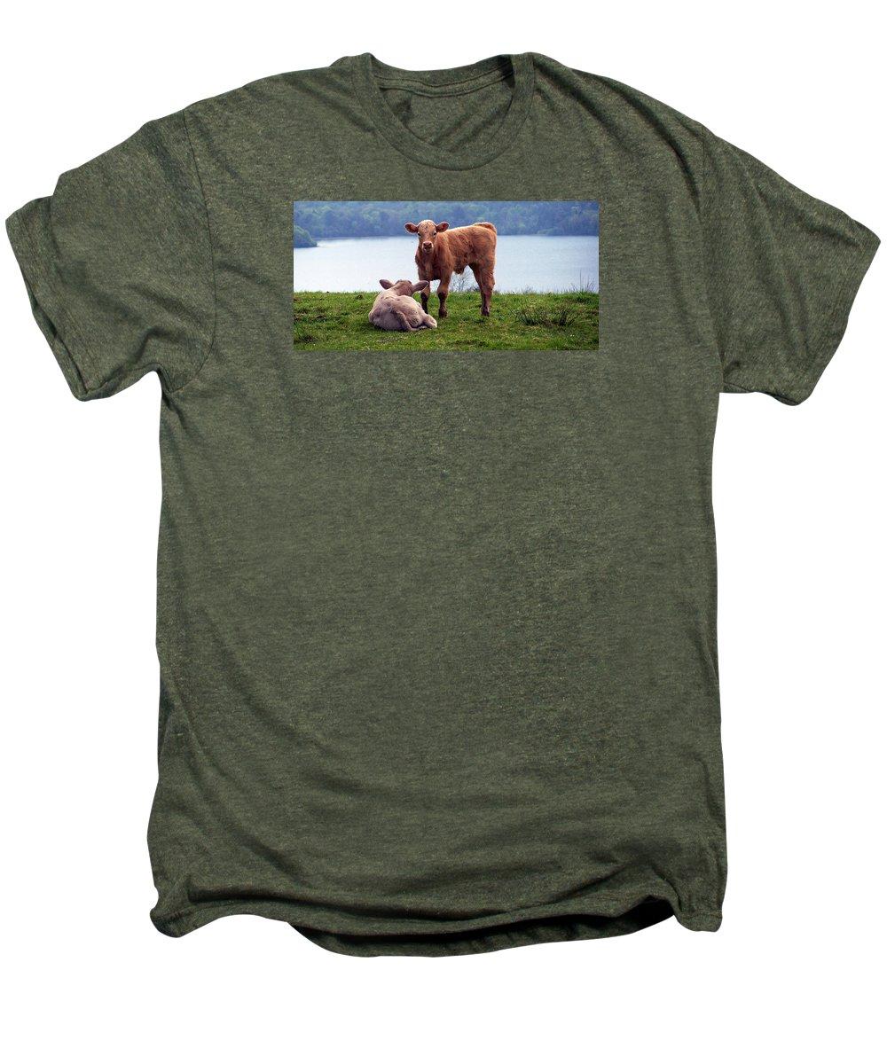 Ireland Men's Premium T-Shirt featuring the photograph Irish Calves At Lough Eske by Teresa Mucha