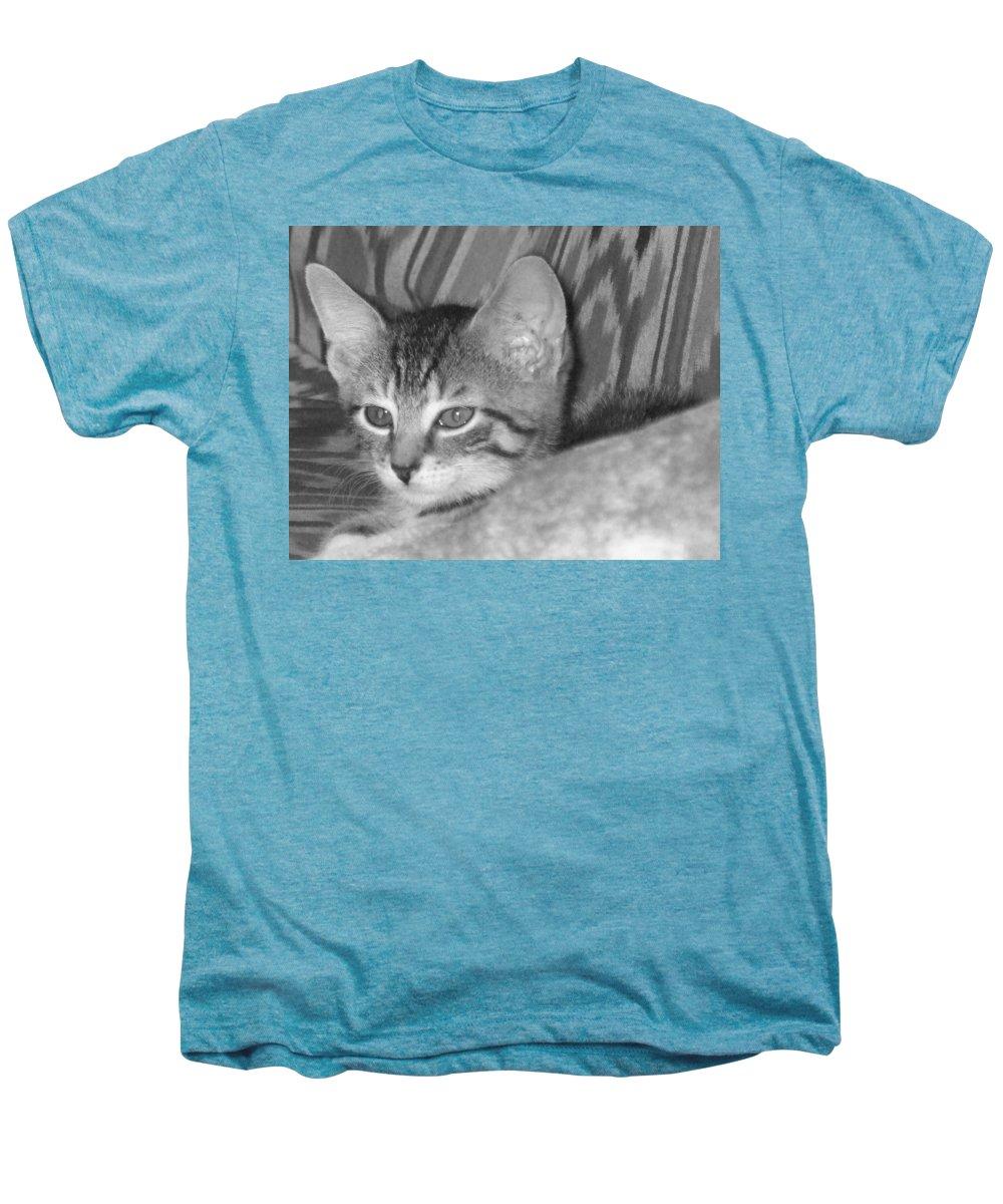 Kitten Men's Premium T-Shirt featuring the photograph Comfy Kitten by Pharris Art