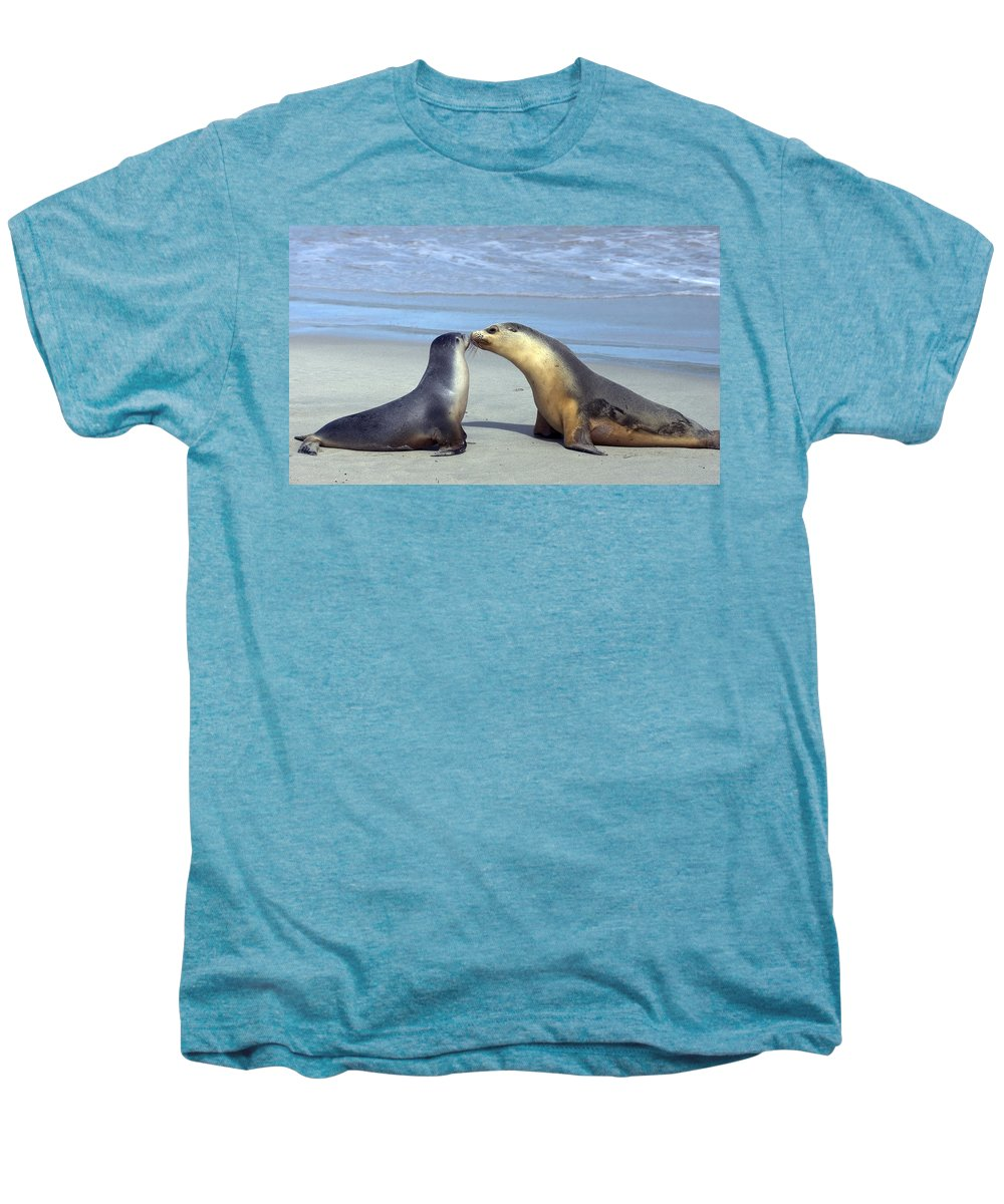 Sea Lion Men's Premium T-Shirt featuring the photograph A Mothers Love by Mike Dawson