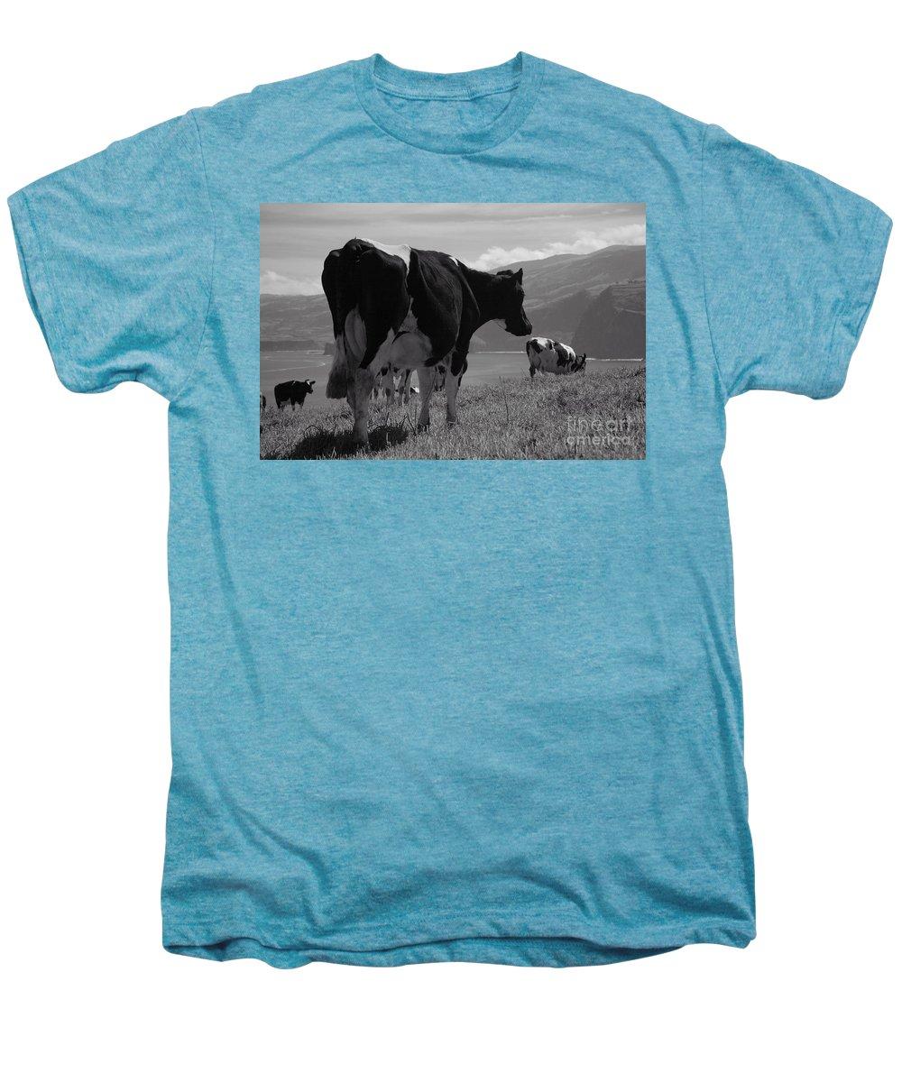 Azoren Men's Premium T-Shirt featuring the photograph Cows by Gaspar Avila