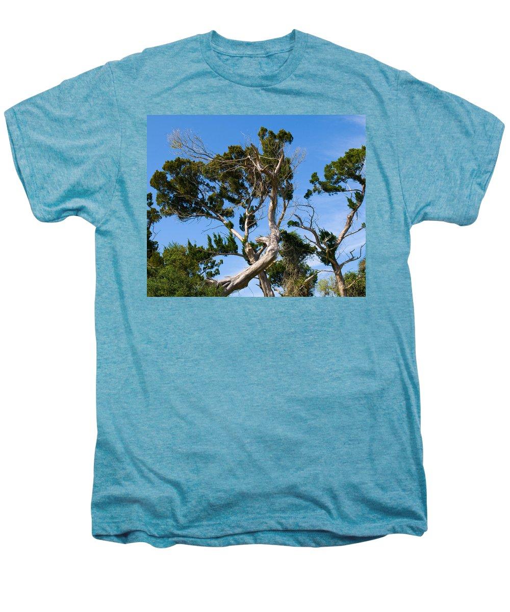 Cedar; Cedars; Tree; Florida; Timucuan; Indian; Mound; Shell; Midden; Oak; Hill; Flora; Branch; Weat Men's Premium T-Shirt featuring the photograph Florida Cedar Tree by Allan Hughes