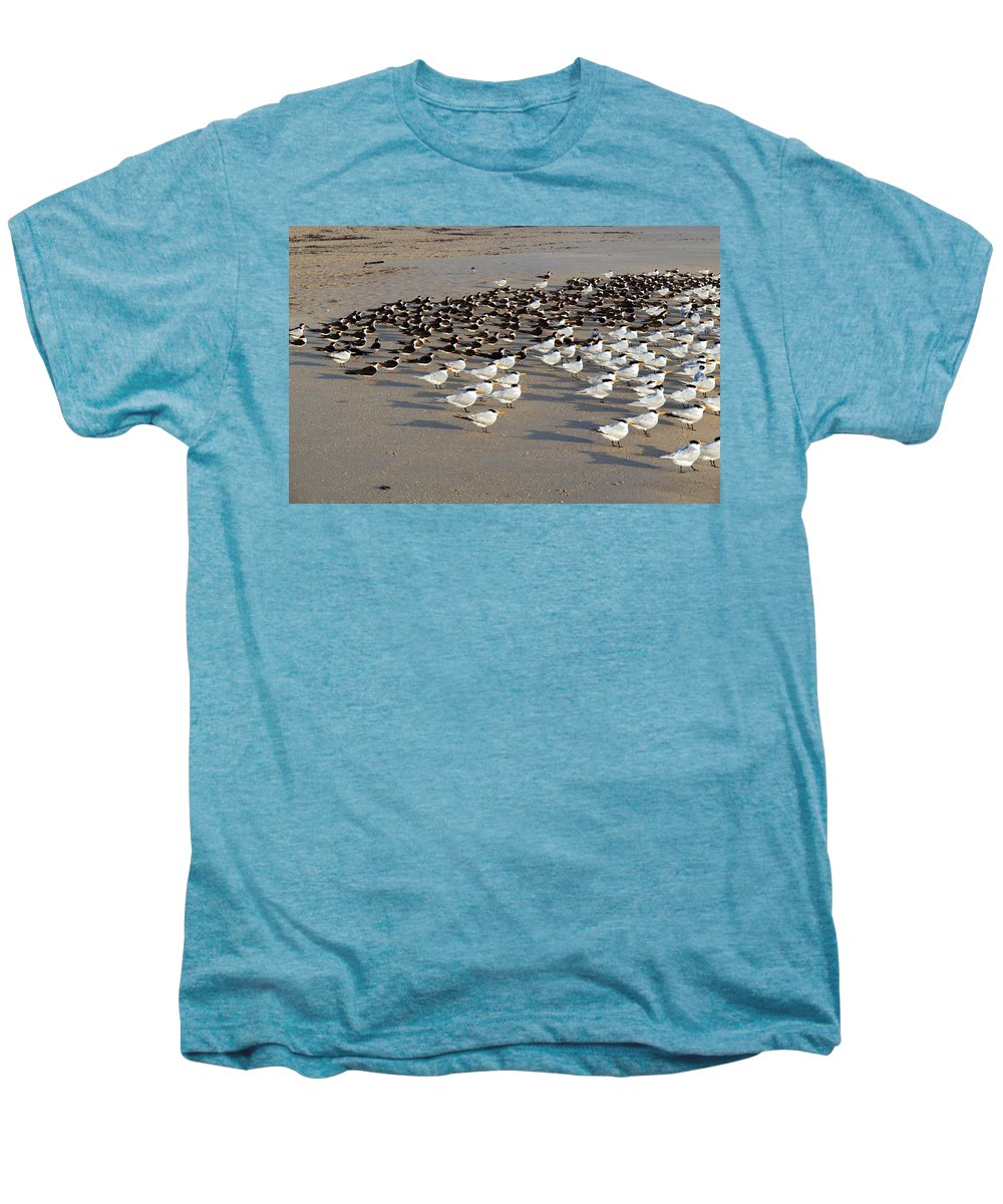 Florida; Bird; Gull; Tern; Royal; Beach; Shore; Coast; Sebastian; Inlet; Sea; Gull; Seagull; Sterna. Men's Premium T-Shirt featuring the photograph Royal Terns At Sebastian Inlet In Florida by Allan Hughes