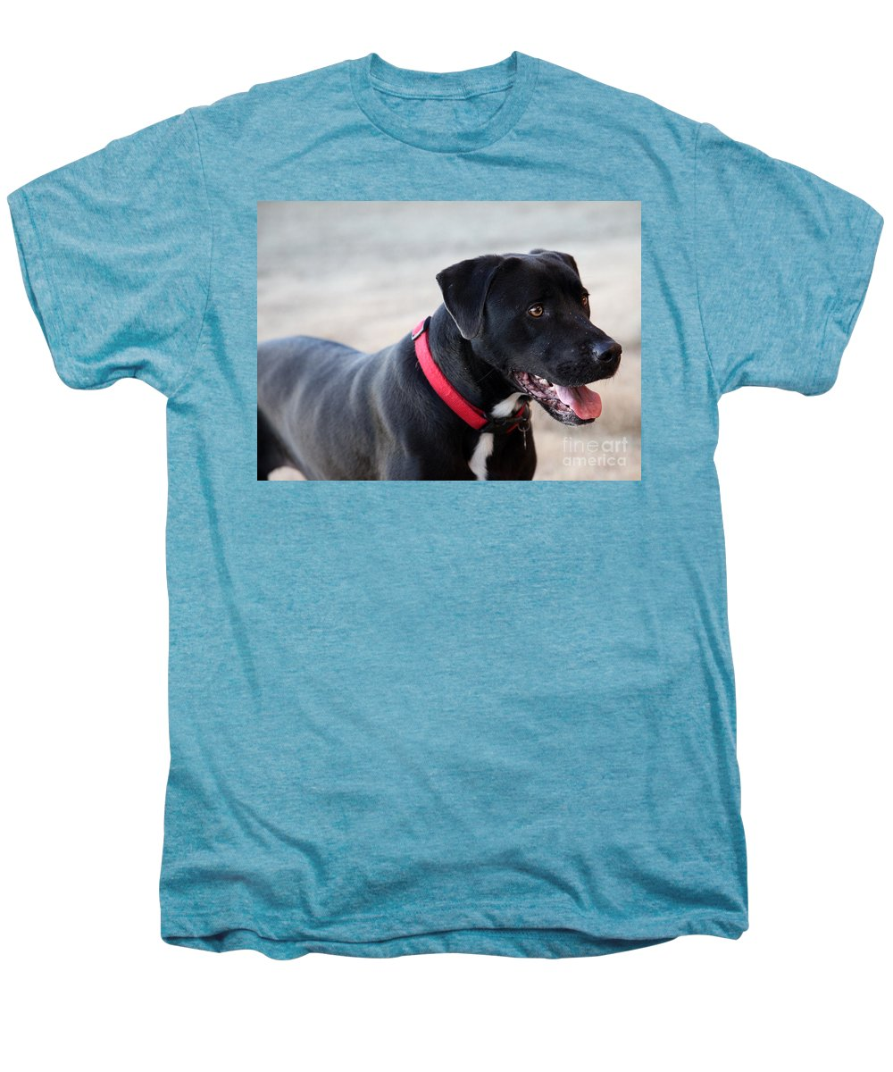 Dogs Men's Premium T-Shirt featuring the photograph Yes I Want To Play by Amanda Barcon
