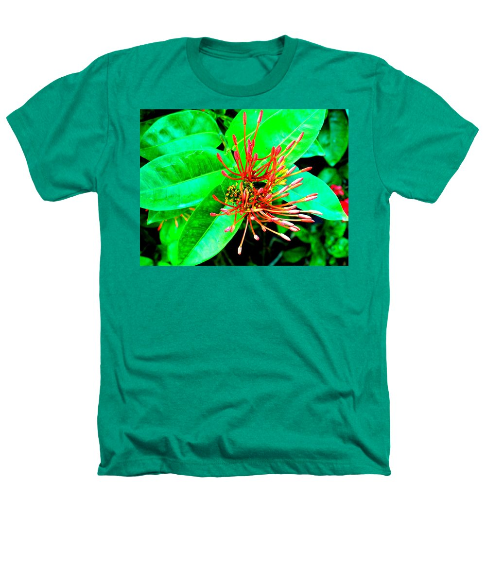 Flower Heathers T-Shirt featuring the photograph In My Garden by Ian MacDonald