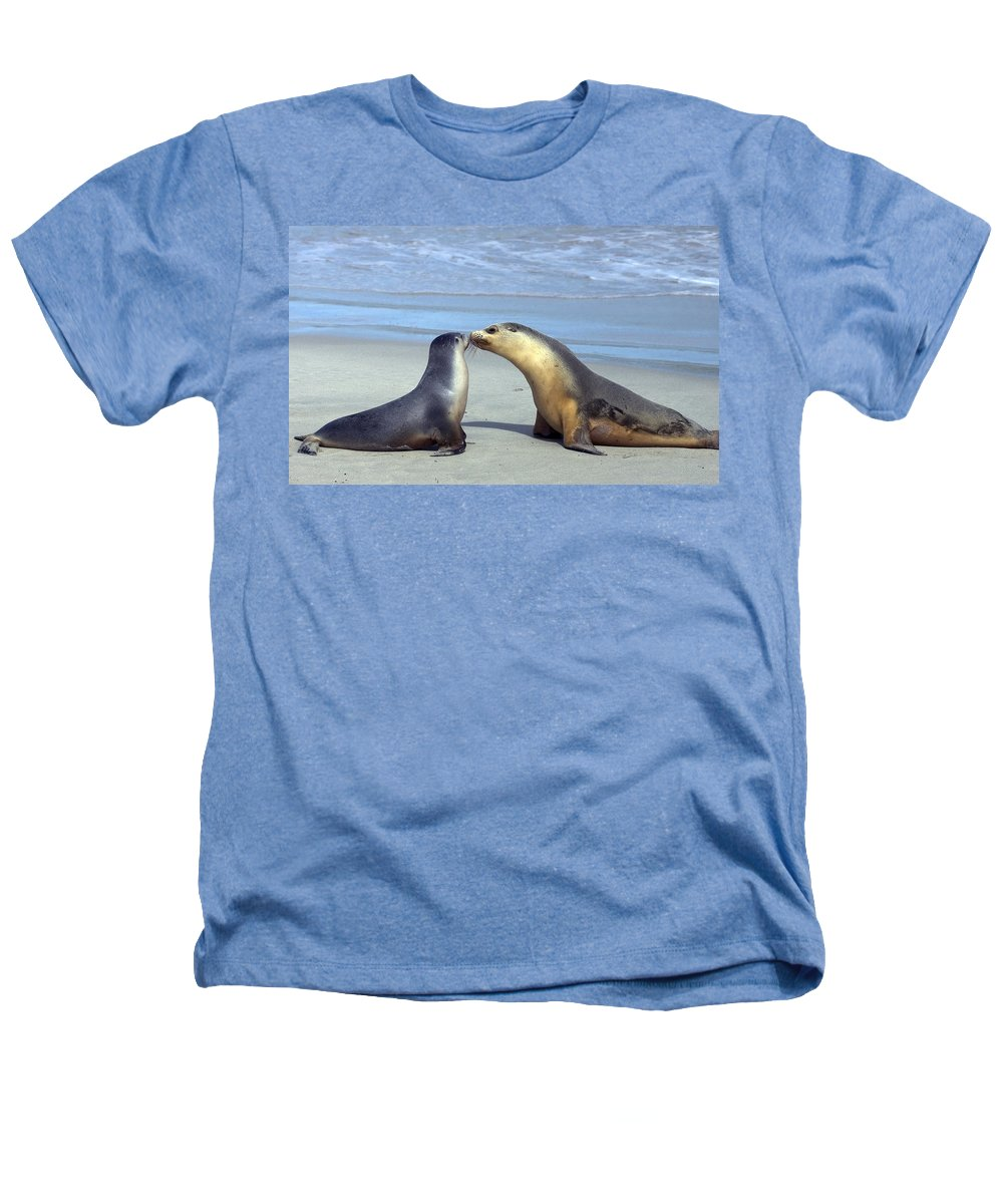 Sea Lion Heathers T-Shirt featuring the photograph A Mothers Love by Mike Dawson