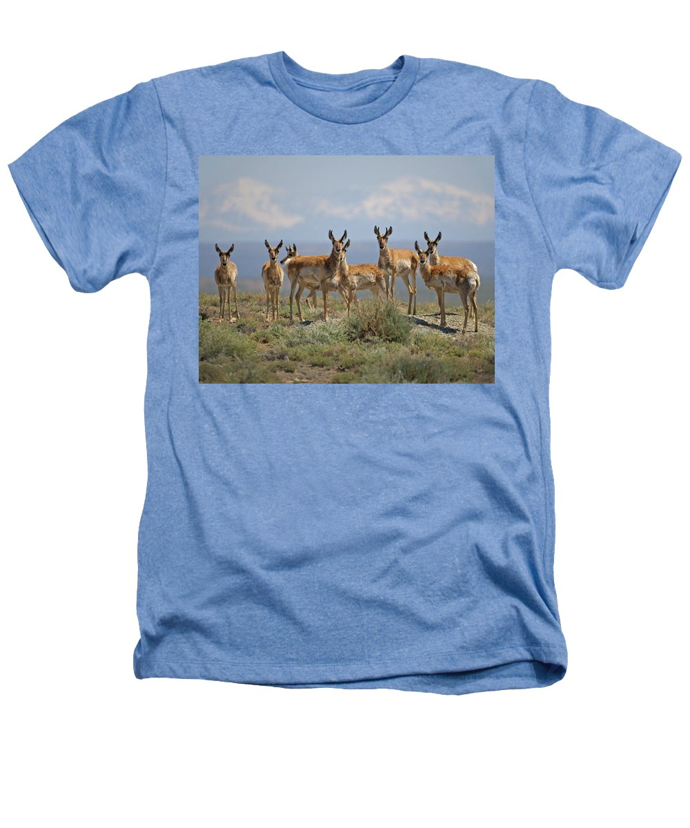 Antelope Heathers T-Shirt featuring the photograph Antelope by Heather Coen