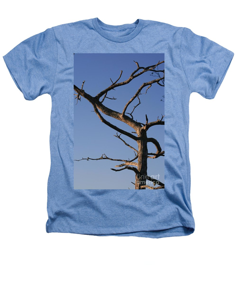Tree Heathers T-Shirt featuring the photograph Gnarly Tree by Nadine Rippelmeyer