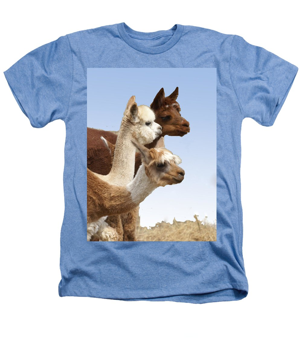 Llama Heathers T-Shirt featuring the photograph Llama's Three by Heather Coen