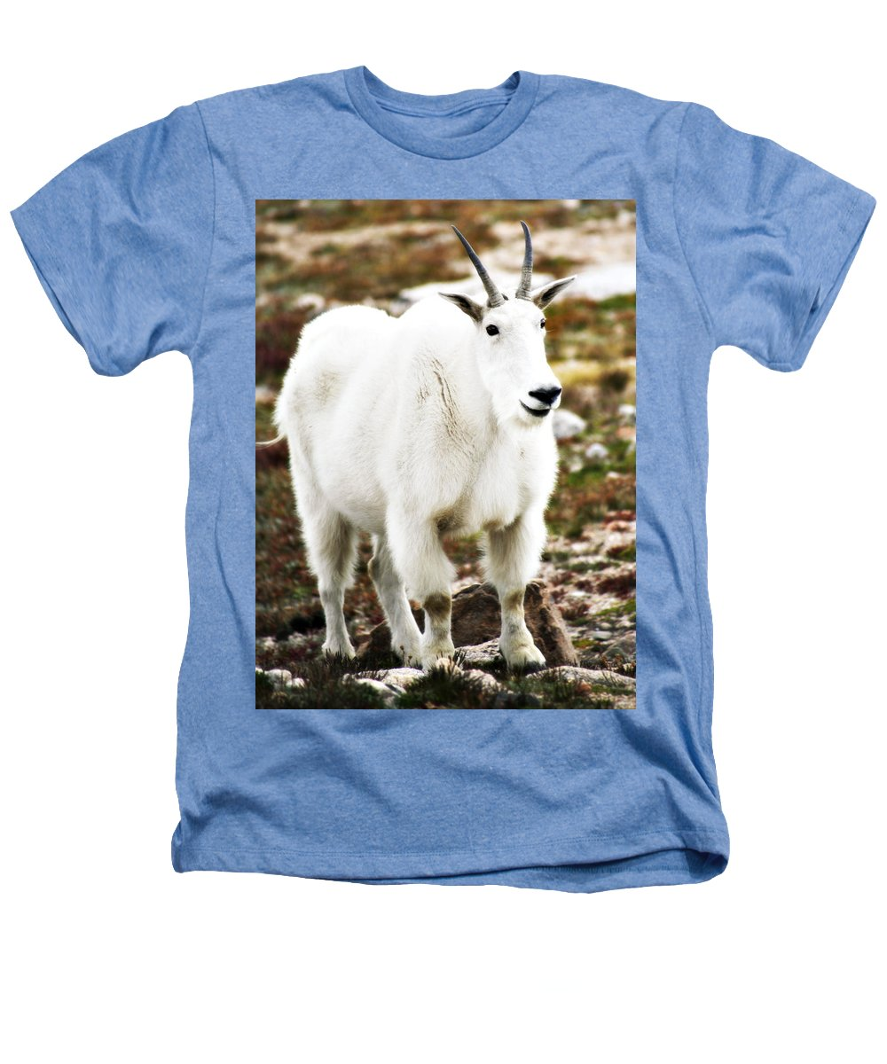 Animal Heathers T-Shirt featuring the photograph Mountain Goat by Marilyn Hunt