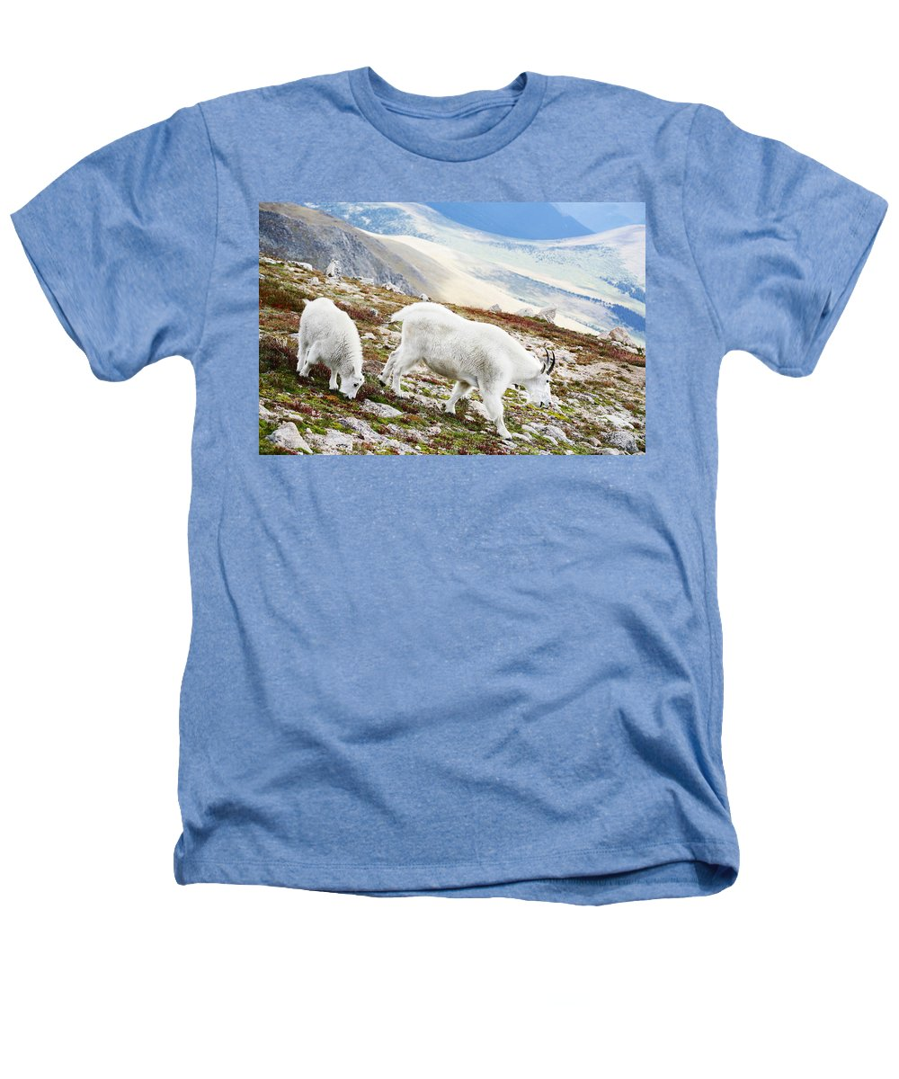 Mountain Heathers T-Shirt featuring the photograph Mountain Goats 1 by Marilyn Hunt