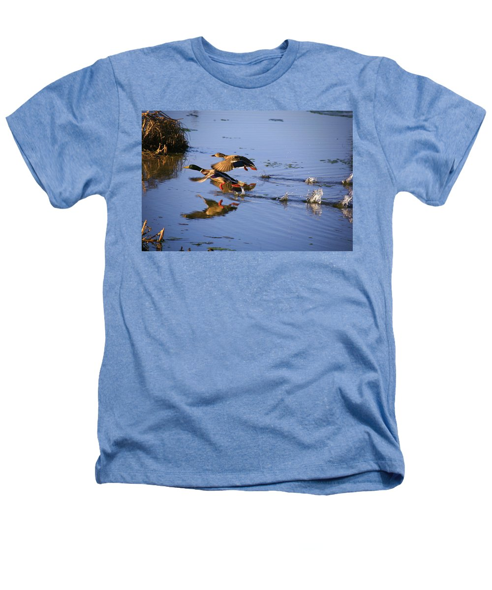 Duck Heathers T-Shirt featuring the photograph Take Off by Robert Pearson