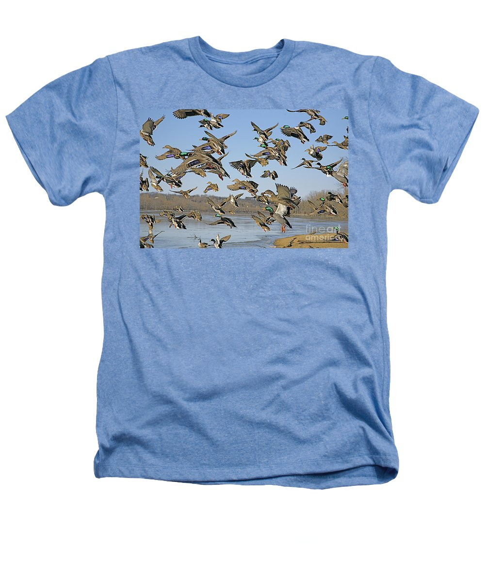 Ducks Heathers T-Shirt featuring the photograph The Mad Rush by Robert Pearson