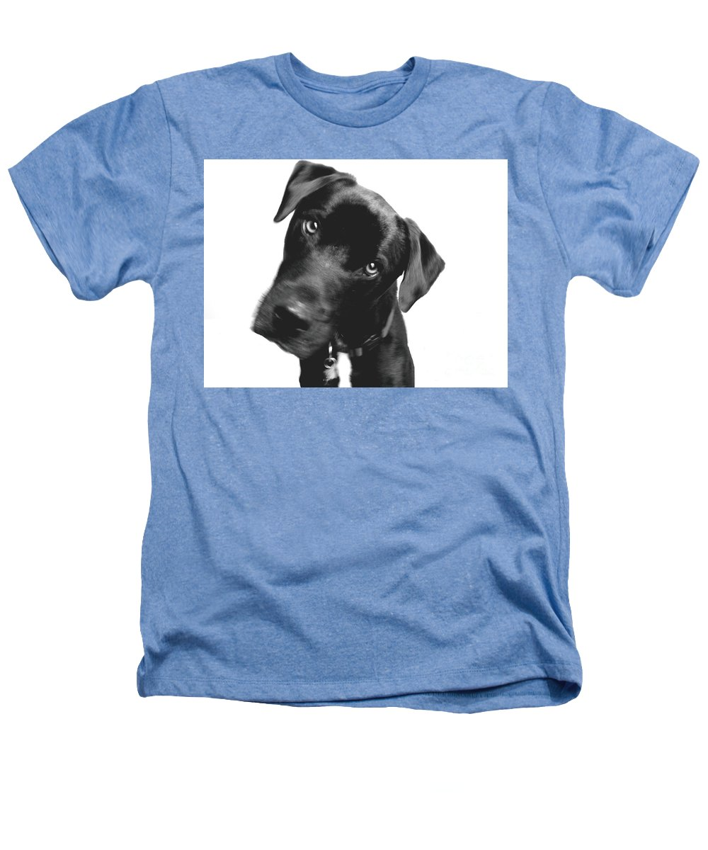 Labrador Heathers T-Shirt featuring the photograph What by Amanda Barcon