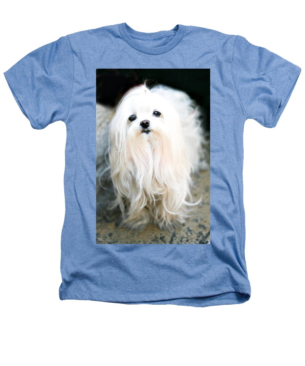Small Heathers T-Shirt featuring the photograph White Fluff by Marilyn Hunt