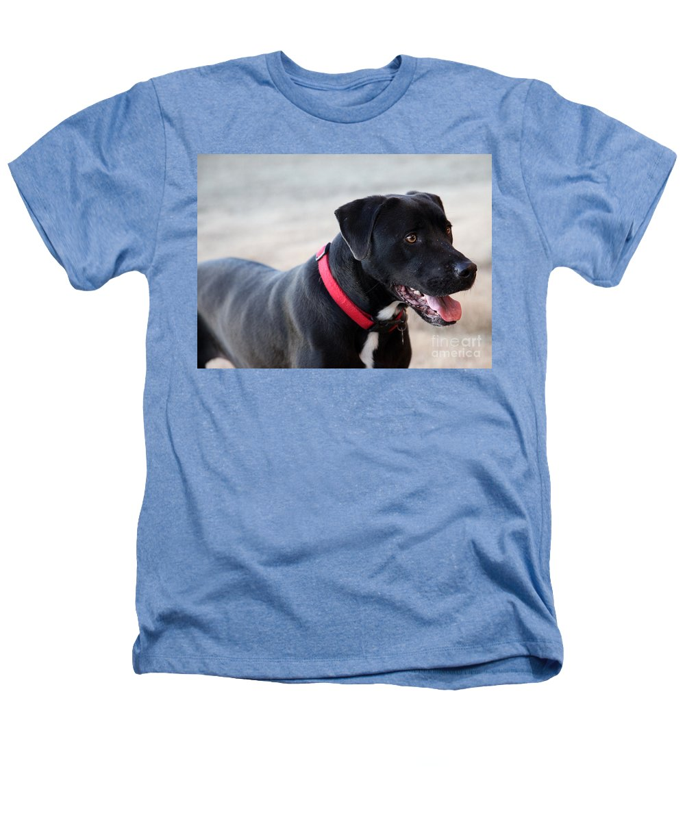 Dogs Heathers T-Shirt featuring the photograph Yes I Want To Play by Amanda Barcon