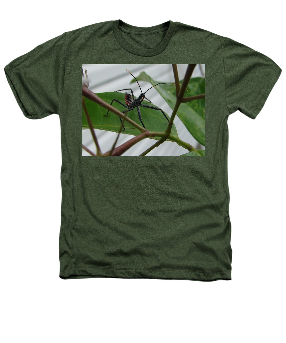 Insect Red Black Green Leaf Heathers T-Shirt featuring the photograph Assassin Bug by Luciana Seymour