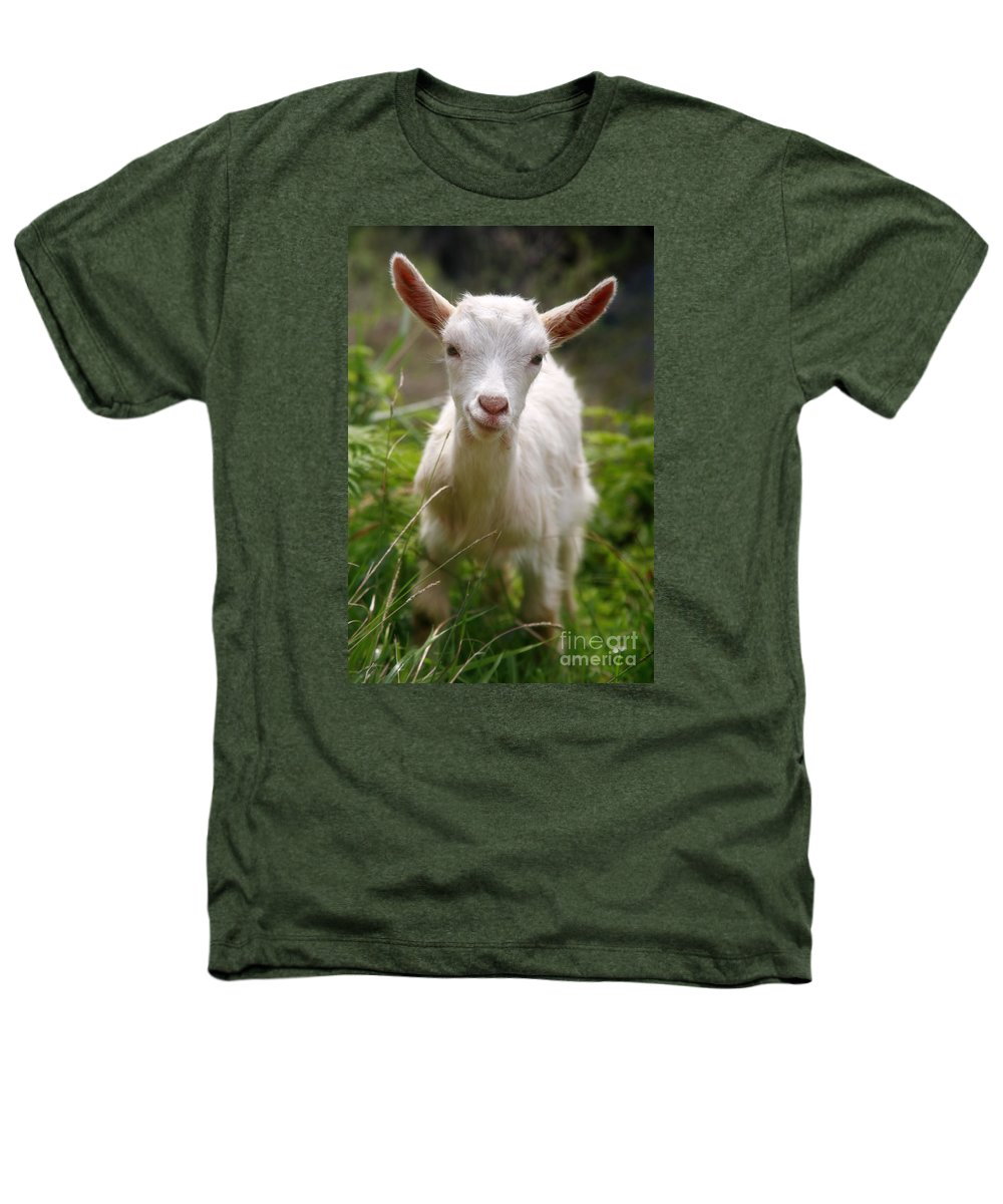 Animals Heathers T-Shirt featuring the photograph Baby Goat by Gaspar Avila