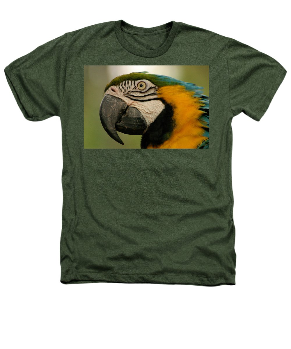 Parrot Heathers T-Shirt featuring the photograph Blue Gold Macaw South America by Ralph A Ledergerber-Photography