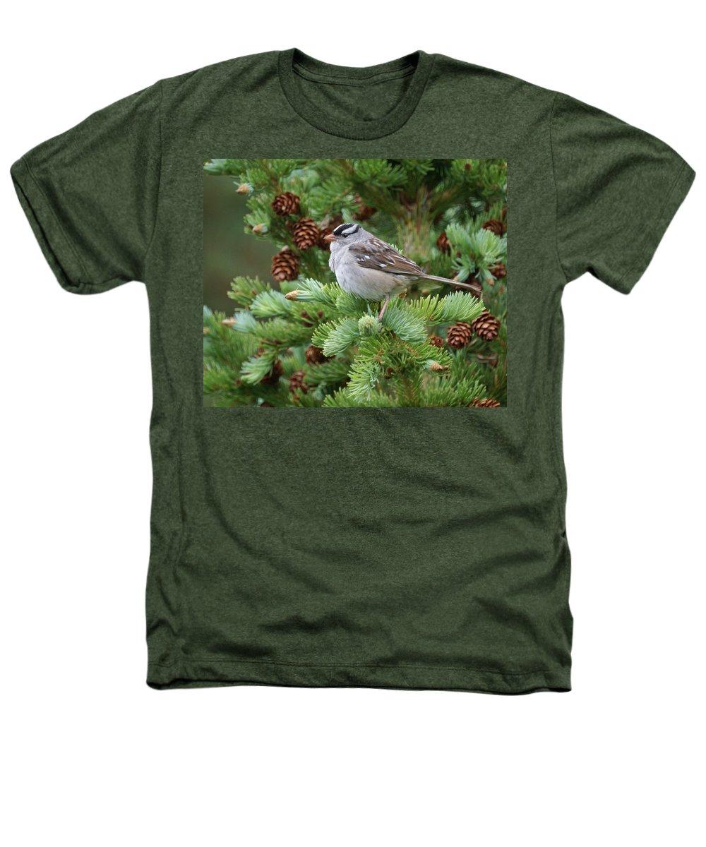 Chickadee Heathers T-Shirt featuring the photograph Chickadee by Heather Coen