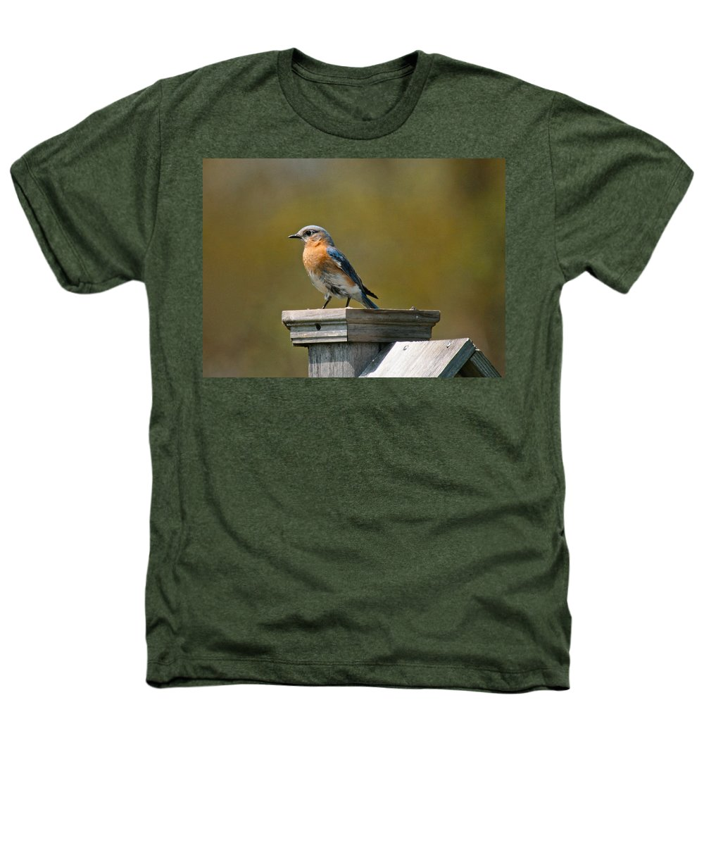 Blue Bird Heathers T-Shirt featuring the photograph Eastern Blue Bird by Robert Pearson