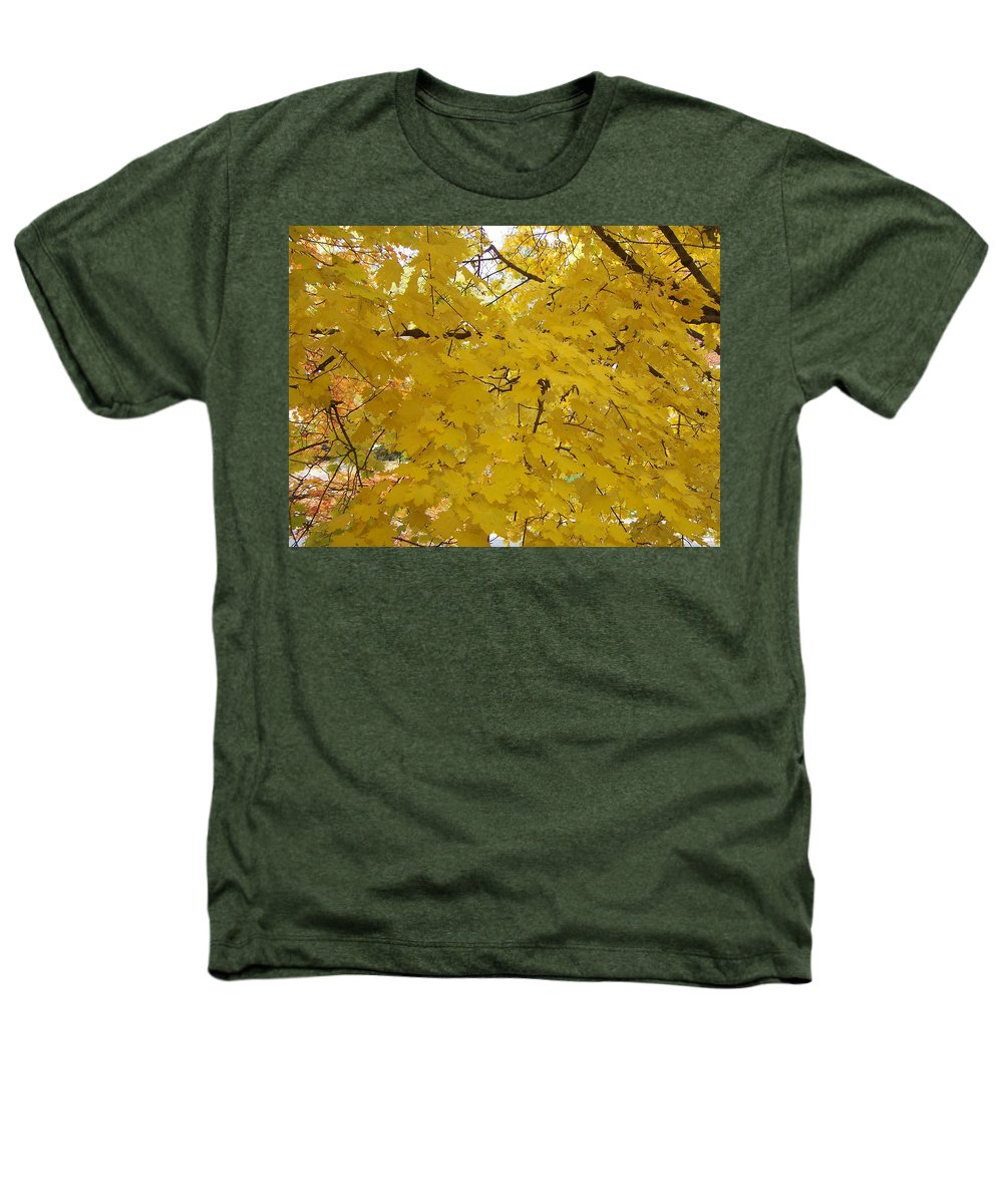 Fall Autum Trees Maple Yellow Heathers T-Shirt featuring the photograph Golden Canopy by Karin Dawn Kelshall- Best