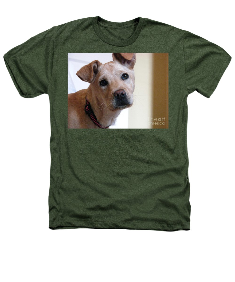 Dog Heathers T-Shirt featuring the photograph Honey by Amanda Barcon