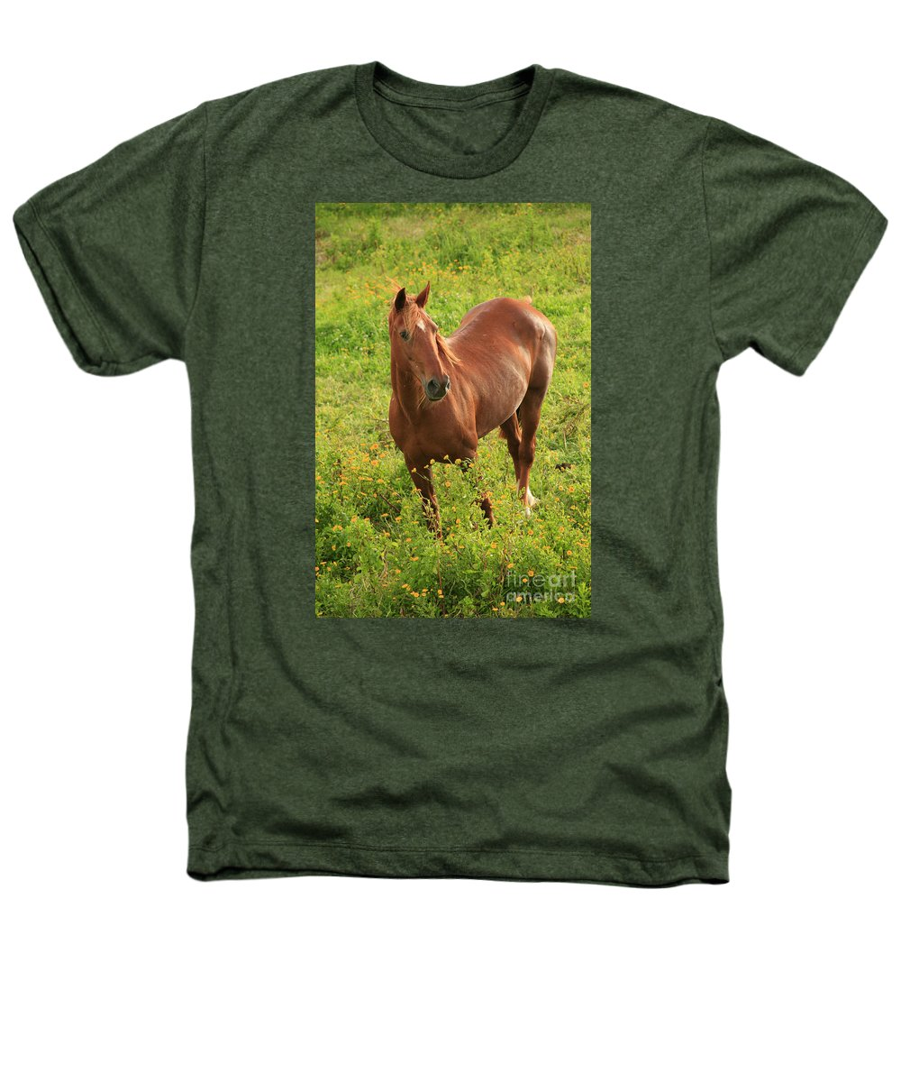 Animals Heathers T-Shirt featuring the photograph Horse In A Field With Flowers by Gaspar Avila