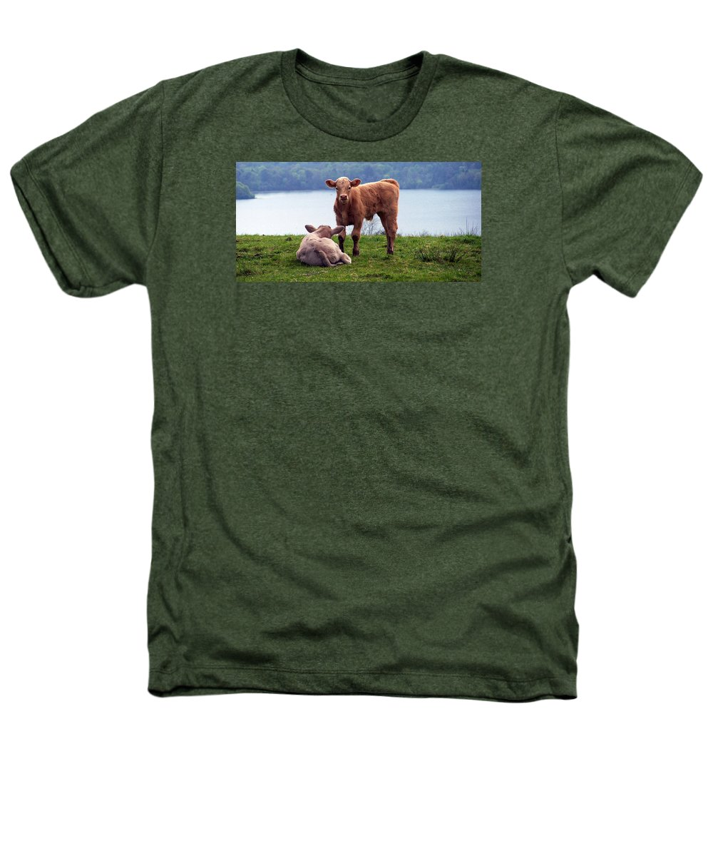 Ireland Heathers T-Shirt featuring the photograph Irish Calves At Lough Eske by Teresa Mucha