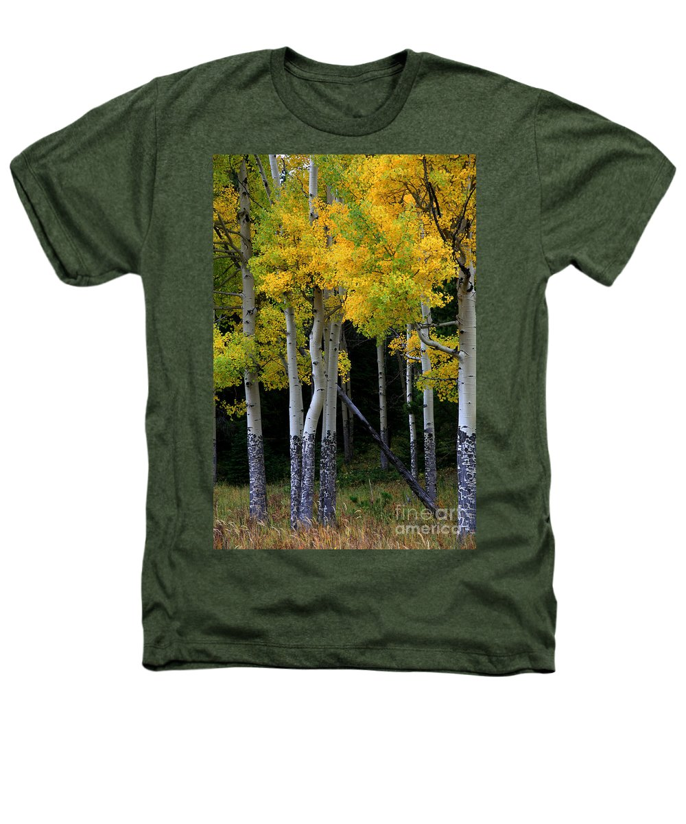Aspens Heathers T-Shirt featuring the photograph Leaning Aspen by Timothy Johnson