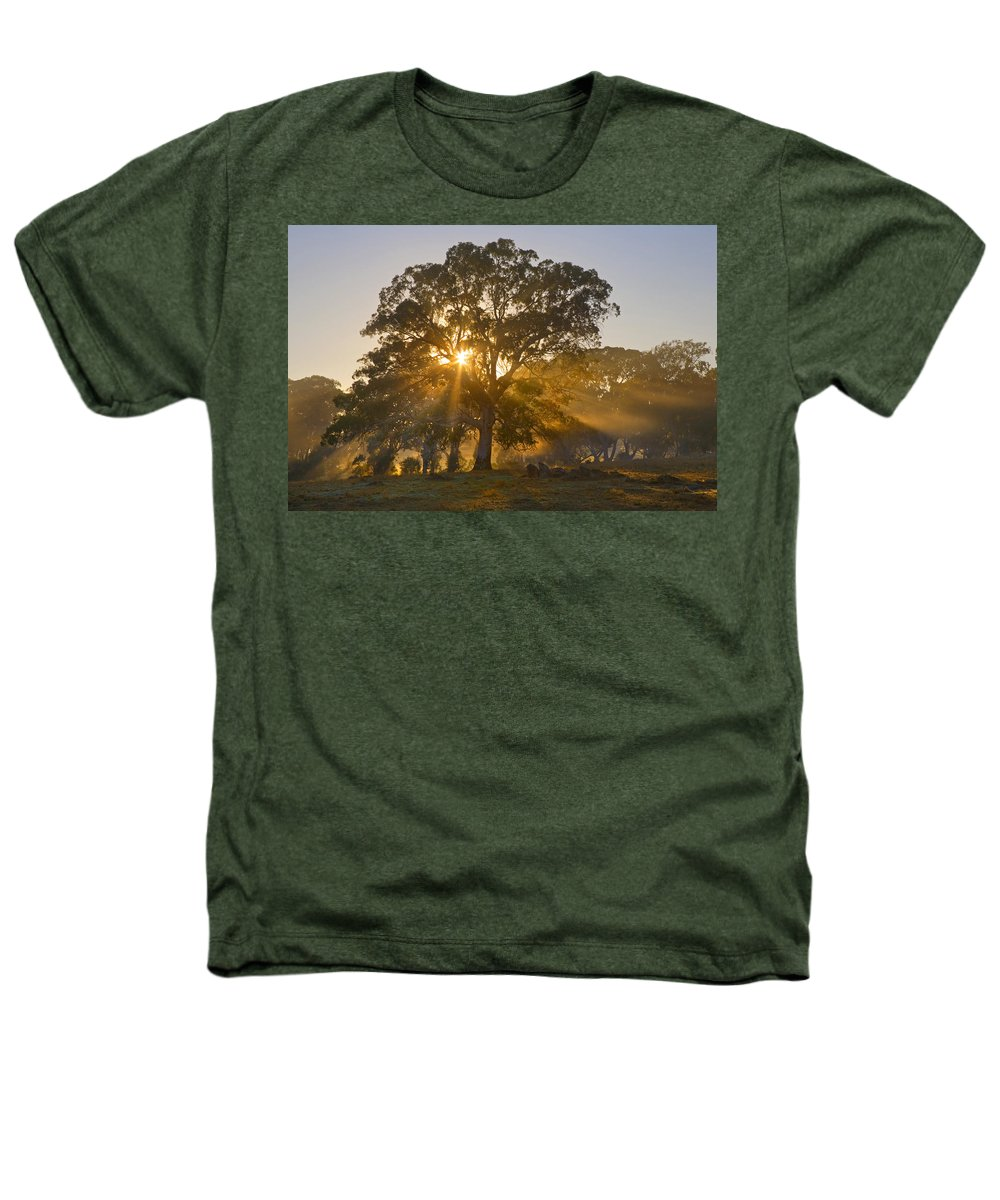 Tree Heathers T-Shirt featuring the photograph Let There Be Light by Mike Dawson