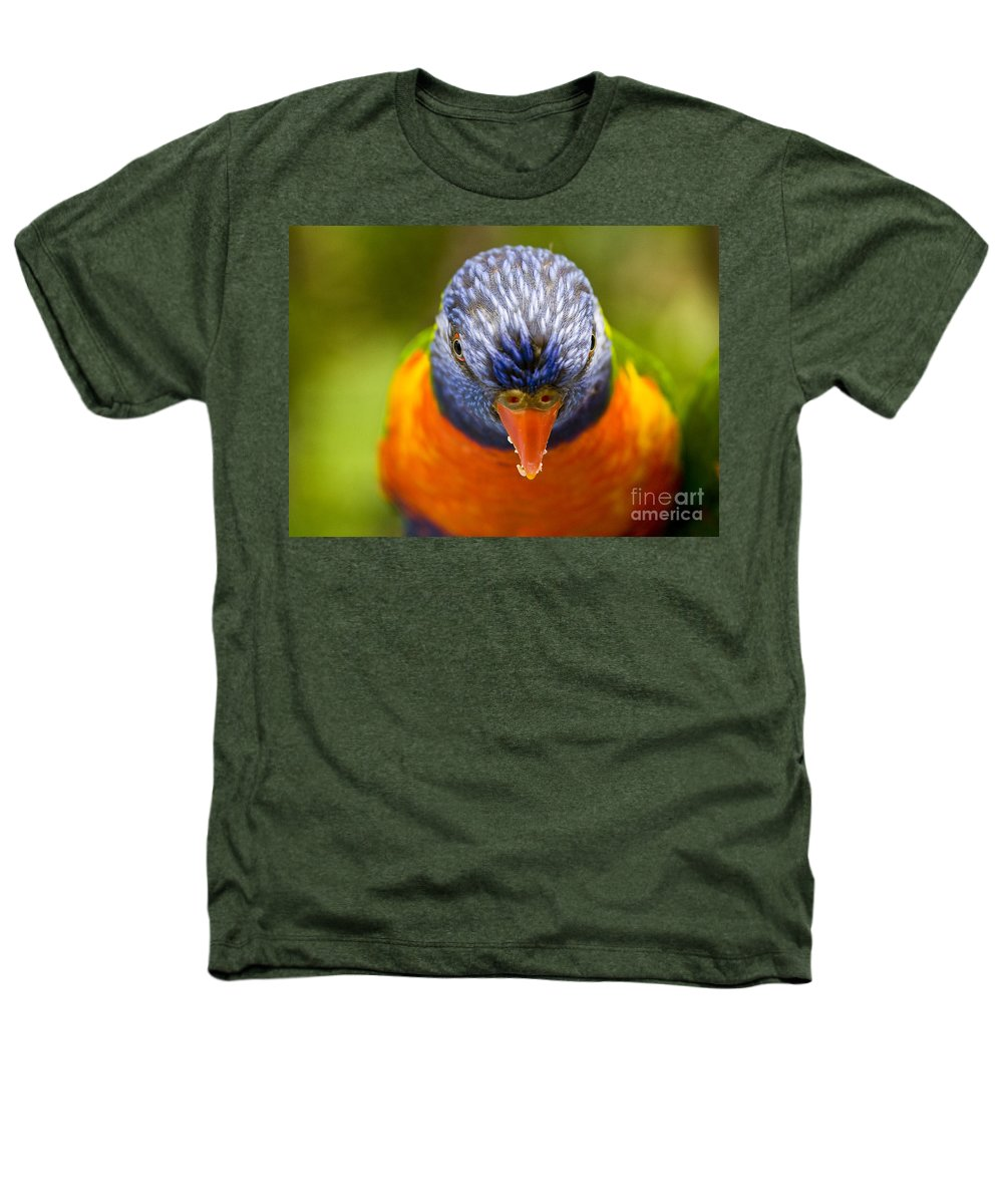Rainbow Lorikeet Heathers T-Shirt featuring the photograph Rainbow Lorikeet by Avalon Fine Art Photography