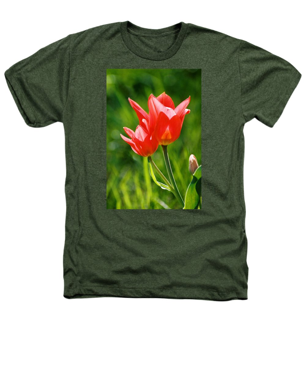 Flowers Heathers T-Shirt featuring the photograph Toronto Tulip by Steve Karol