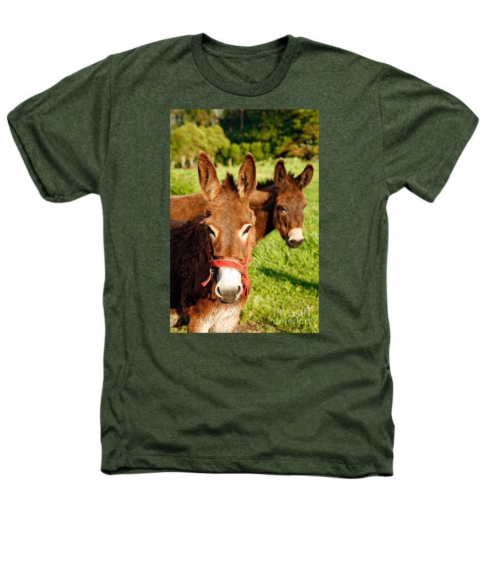 Animals Heathers T-Shirt featuring the photograph Two Donkeys by Gaspar Avila