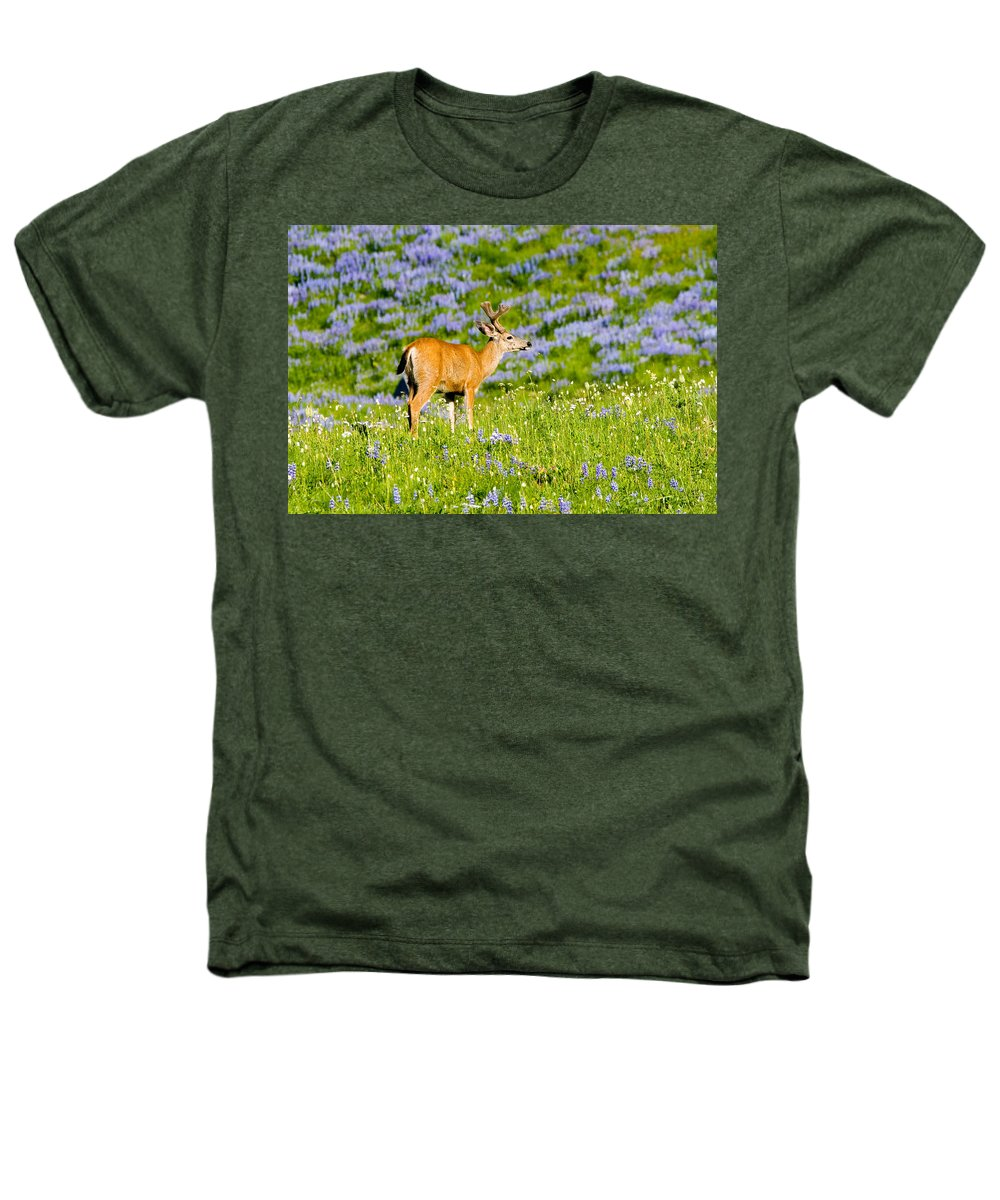 Deer Heathers T-Shirt featuring the photograph Velvet On Lupine by Mike Dawson