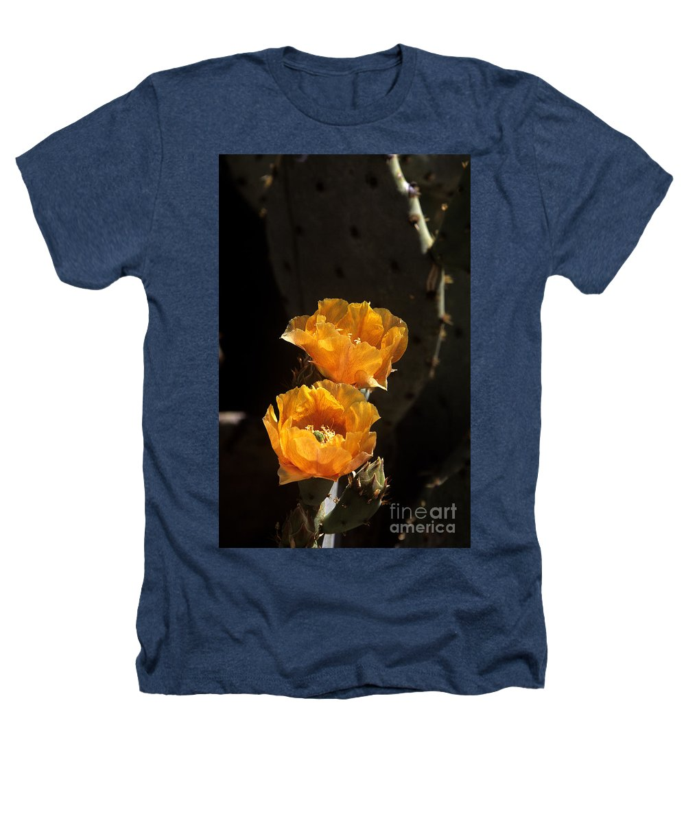Cactus Heathers T-Shirt featuring the photograph Apricot Blossoms by Kathy McClure