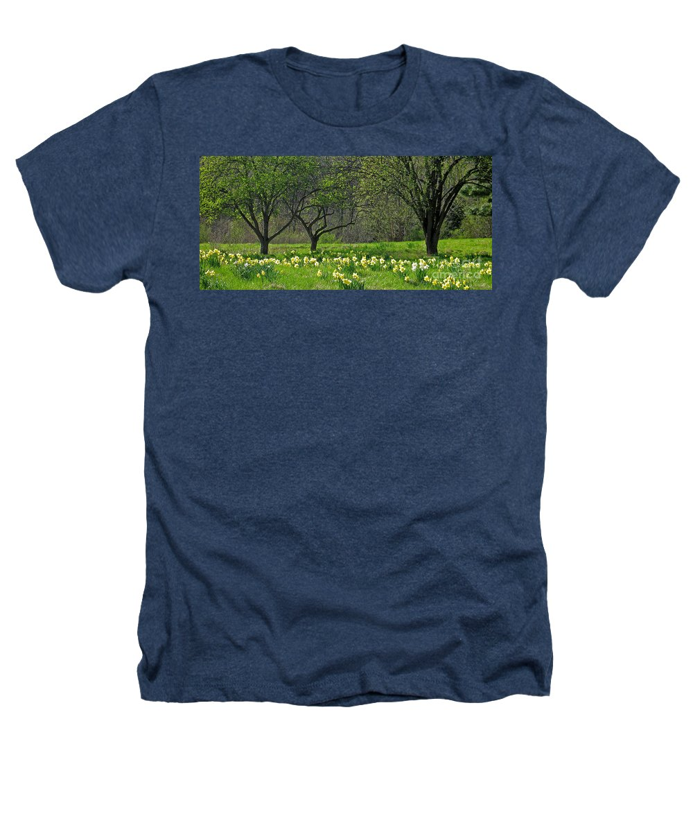 Spring Heathers T-Shirt featuring the photograph Daffodil Meadow by Ann Horn
