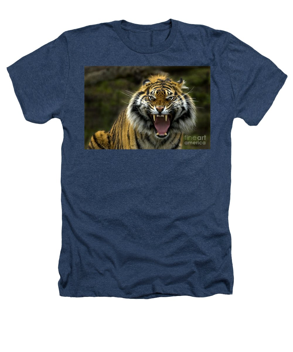Tiger Heathers T-Shirt featuring the photograph Eyes Of The Tiger by Mike Dawson